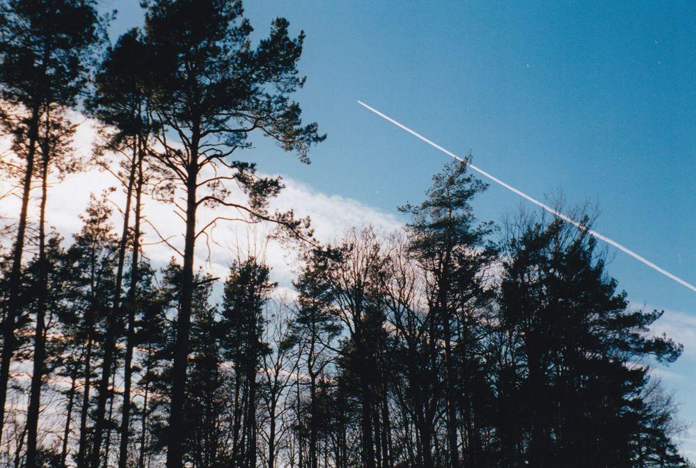 Bäume und Kondensstreifen (1998)
