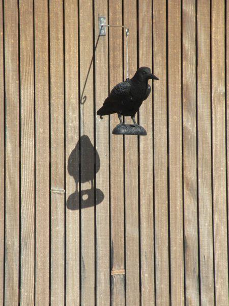 Kunststoffrabe und sein Schatten