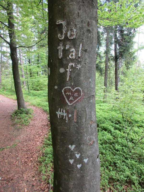 Der Baum mit vielen Herzen